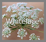 top_whitelace